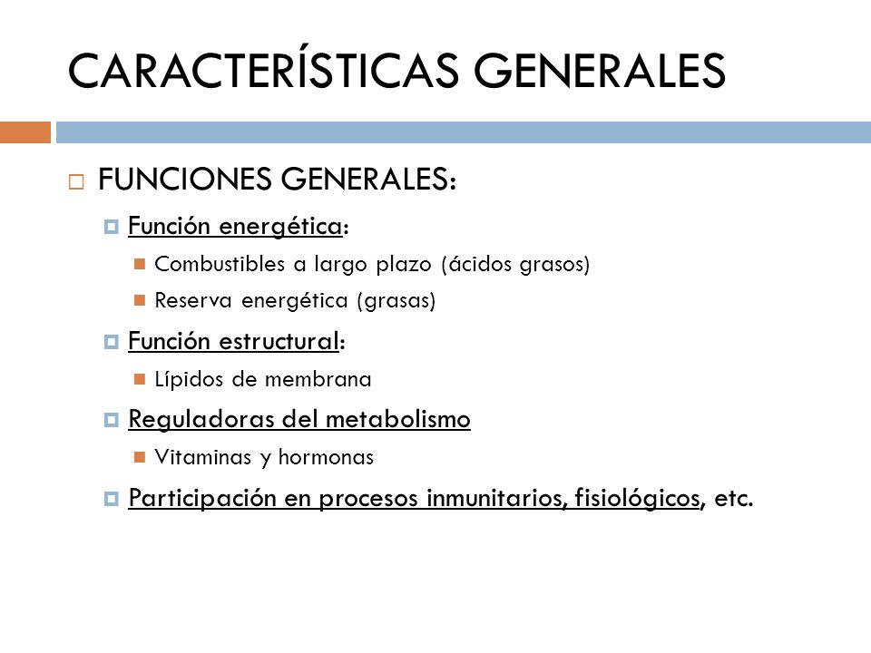 CARACTERÍSTICAS GENERALES FUNCIONES GENERALES: Función energética: Combustibles a largo plazo (ácidos grasos) Reserva energética (grasas) Función estr