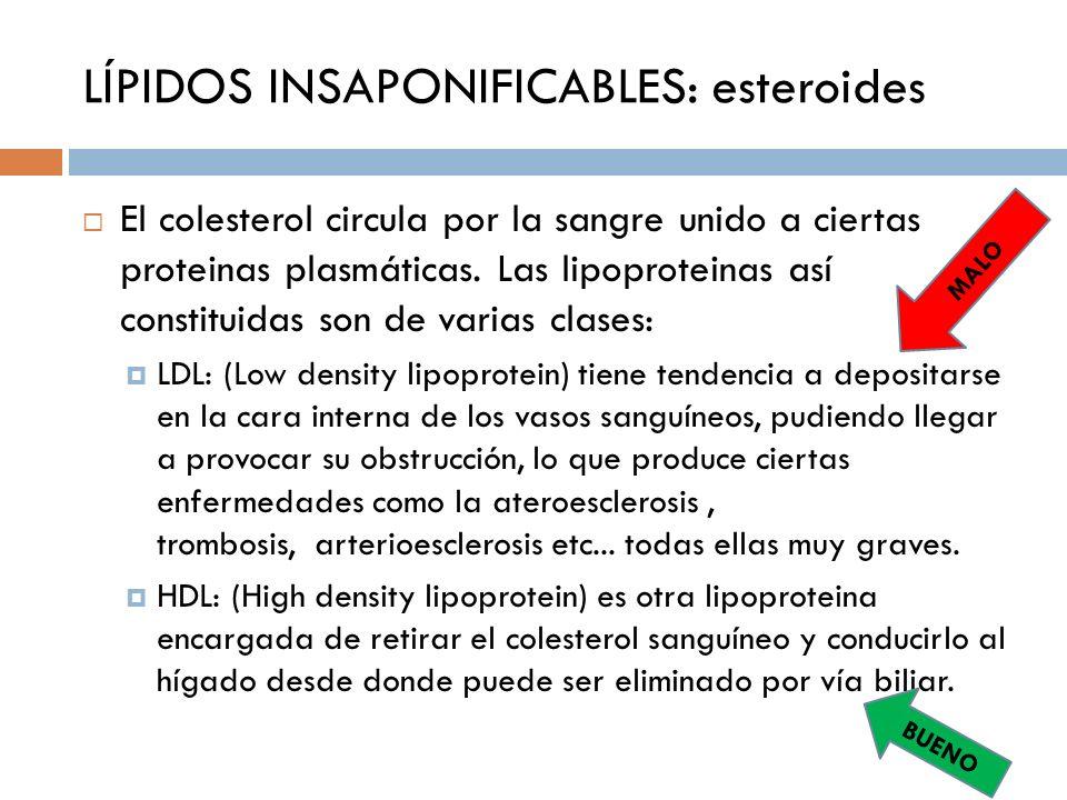 LÍPIDOS INSAPONIFICABLES: esteroides El colesterol circula por la sangre unido a ciertas proteinas plasmáticas. Las lipoproteinas así constituidas son