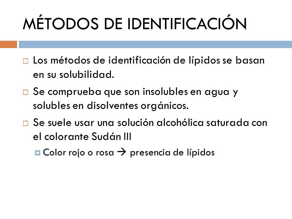 MÉTODOS DE IDENTIFICACIÓN Los métodos de identificación de lípidos se basan en su solubilidad. Se comprueba que son insolubles en agua y solubles en d