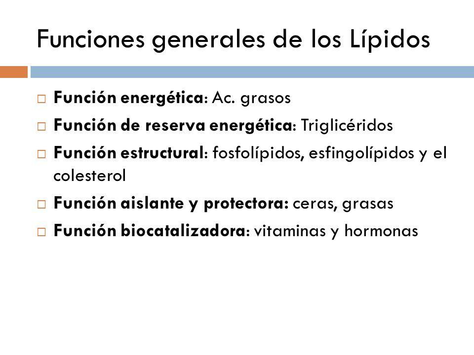 Funciones generales de los Lípidos Función energética: Ac. grasos Función de reserva energética: Triglicéridos Función estructural: fosfolípidos, esfi