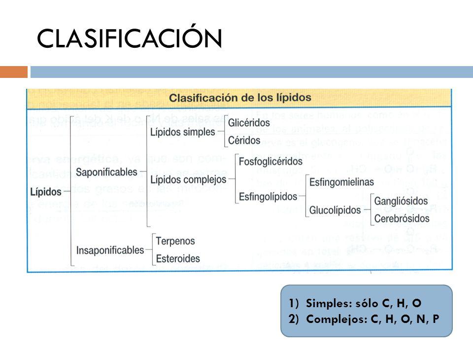 CLASIFICACIÓN 1)Simples: sólo C, H, O 2)Complejos: C, H, O, N, P