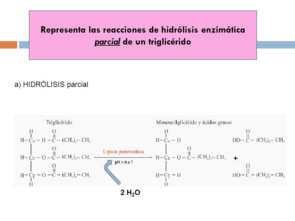 Representa las reacciones de hidrólisis enzimática parcial de un triglicérido a) HIDRÓLISIS parcial 2 H 2 O +