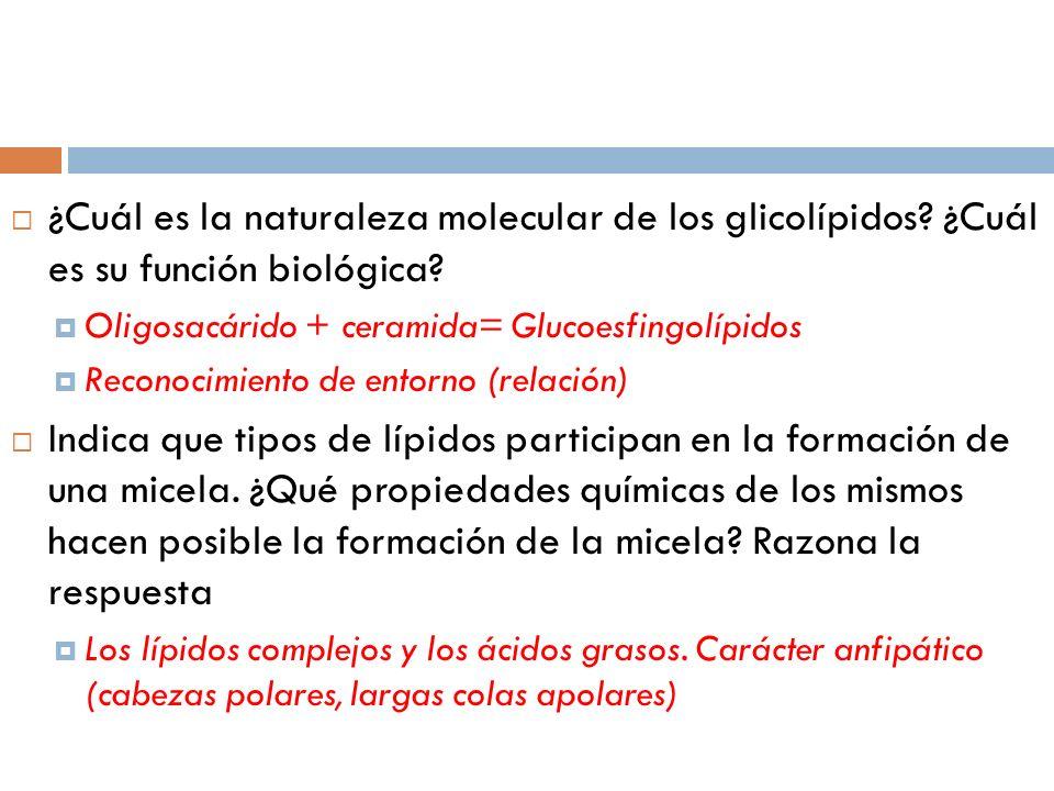 ¿Cuál es la naturaleza molecular de los glicolípidos? ¿Cuál es su función biológica? Oligosacárido + ceramida= Glucoesfingolípidos Reconocimiento de e