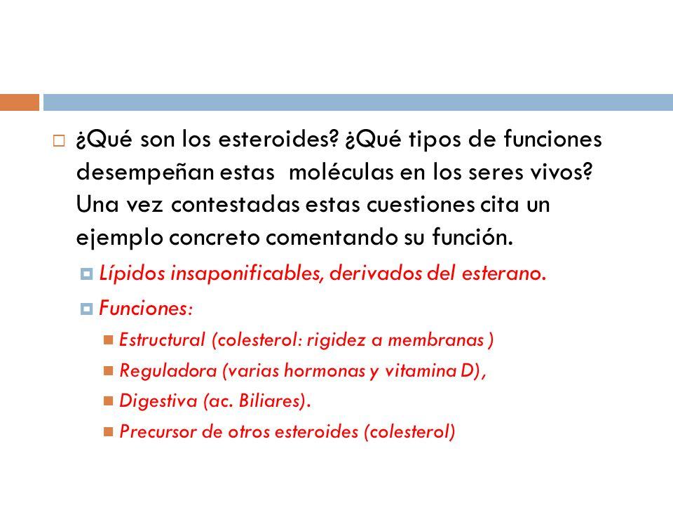¿Qué son los esteroides? ¿Qué tipos de funciones desempeñan estas moléculas en los seres vivos? Una vez contestadas estas cuestiones cita un ejemplo c