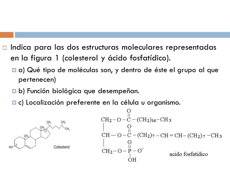 Indica para las dos estructuras moleculares representadas en la figura 1 (colesterol y ácido fosfatídico). a) Qué tipo de moléculas son, y dentro de é