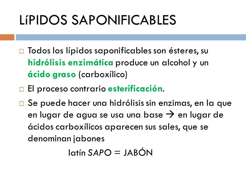 LíPIDOS SAPONIFICABLES Todos los lípidos saponificables son ésteres, su hidrólisis enzimática produce un alcohol y un ácido graso (carboxílico) El pro