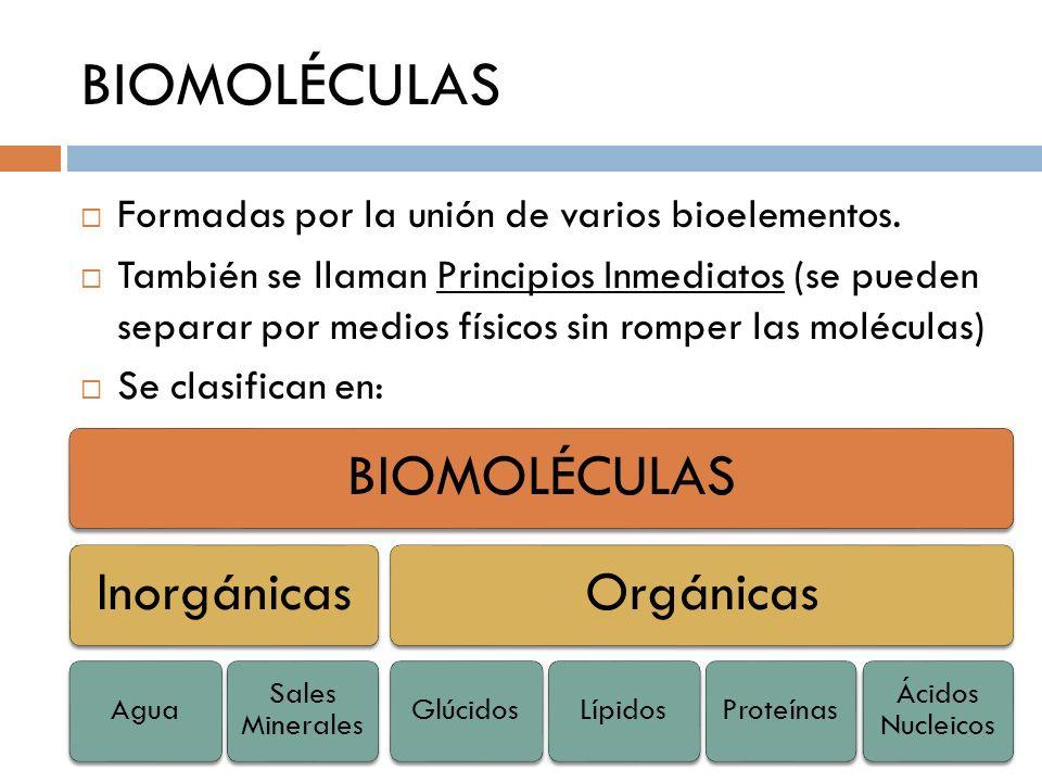 BIOMOLÉCULAS Formadas por la unión de varios bioelementos. También se llaman Principios Inmediatos (se pueden separar por medios físicos sin romper la