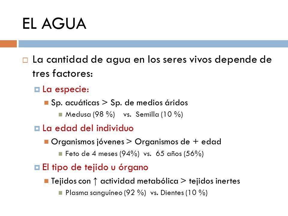 EL AGUA La cantidad de agua en los seres vivos depende de tres factores: La especie: Sp. acuáticas > Sp. de medios áridos Medusa (98 %) vs. Semilla (1