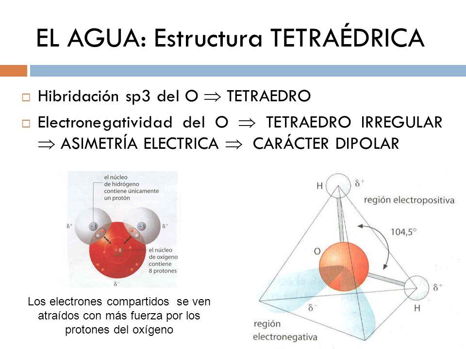 EL AGUA: Estructura TETRAÉDRICA Hibridación sp3 del O TETRAEDRO Electronegatividad del O TETRAEDRO IRREGULAR ASIMETRÍA ELECTRICA CARÁCTER DIPOLAR Los