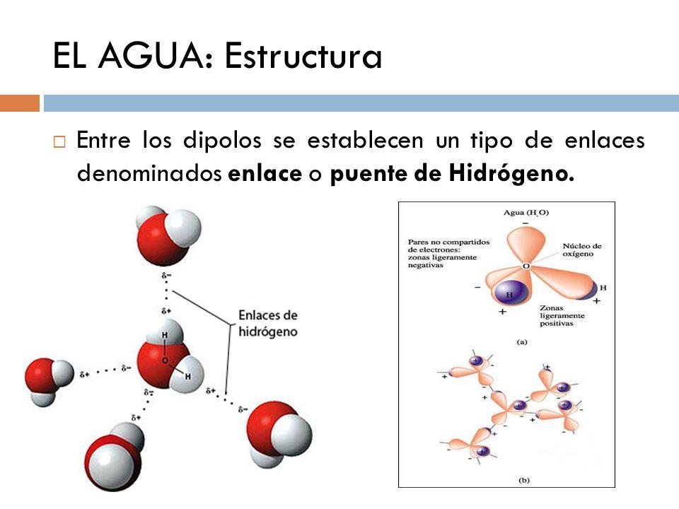 EL AGUA: Estructura Entre los dipolos se establecen un tipo de enlaces denominados enlace o puente de Hidrógeno.