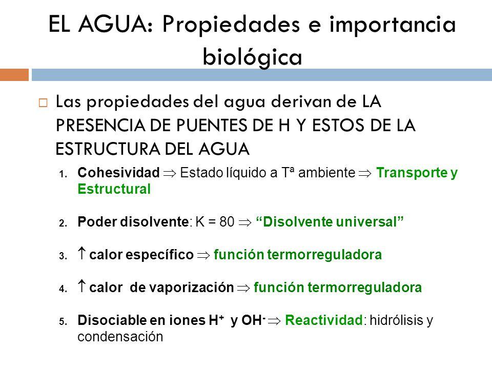 EL AGUA: Propiedades e importancia biológica Las propiedades del agua derivan de LA PRESENCIA DE PUENTES DE H Y ESTOS DE LA ESTRUCTURA DEL AGUA 1.Cohe