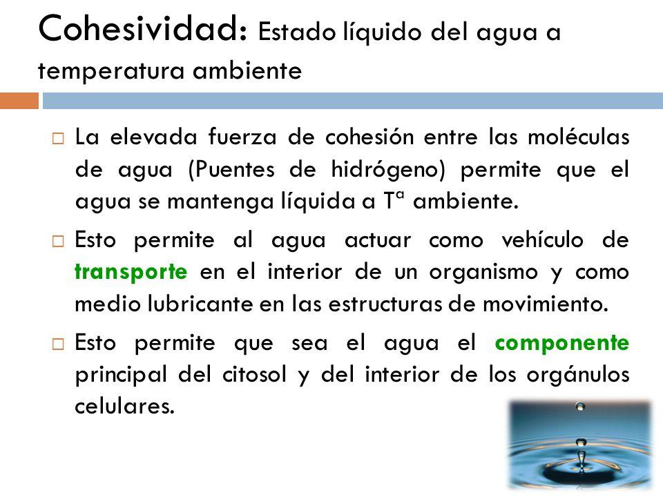 Cohesividad: Estado líquido del agua a temperatura ambiente La elevada fuerza de cohesión entre las moléculas de agua (Puentes de hidrógeno) permite q