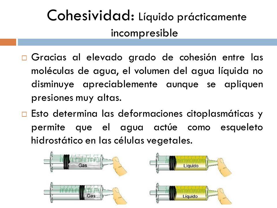Cohesividad: Líquido prácticamente incompresible Gracias al elevado grado de cohesión entre las moléculas de agua, el volumen del agua líquida no dism