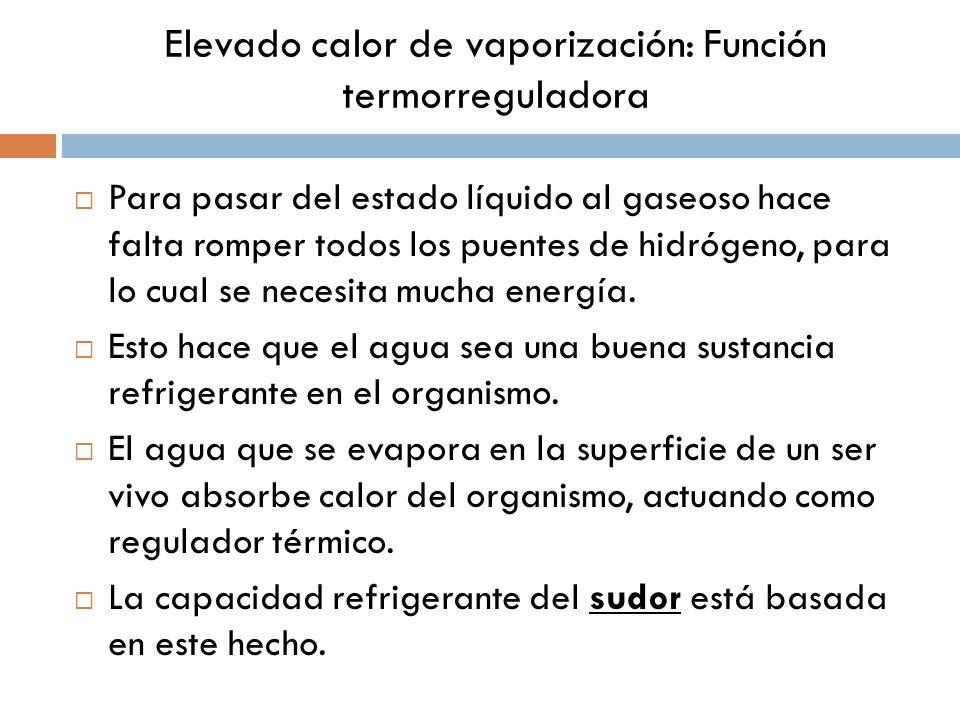 Elevado calor de vaporización: Función termorreguladora Para pasar del estado líquido al gaseoso hace falta romper todos los puentes de hidrógeno, par