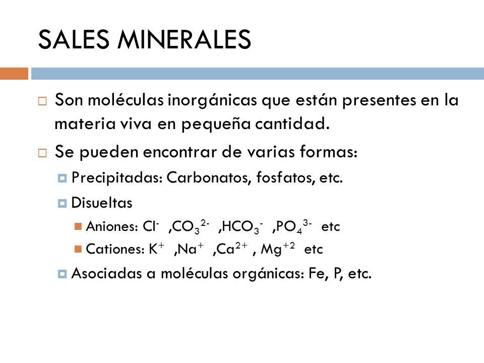 SALES MINERALES Son moléculas inorgánicas que están presentes en la materia viva en pequeña cantidad. Se pueden encontrar de varias formas: Precipitad