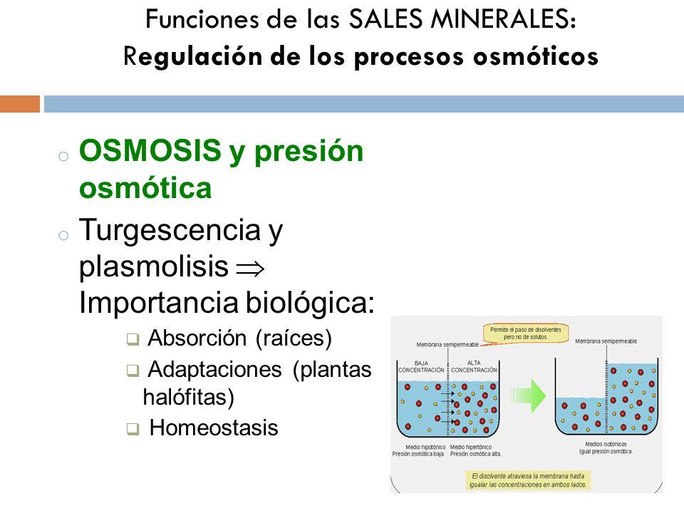 Funciones de las SALES MINERALES: Regulación de los procesos osmóticos o OSMOSIS y presión osmótica o Turgescencia y plasmolisis Importancia biológica