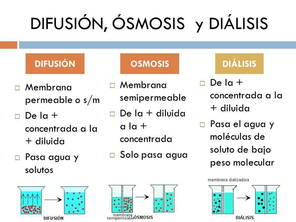 DIFUSIÓN, ÓSMOSIS y DIÁLISIS Membrana semipermeable De la + diluida a la + concentrada Solo pasa agua De la + concentrada a la + diluida Pasa el agua