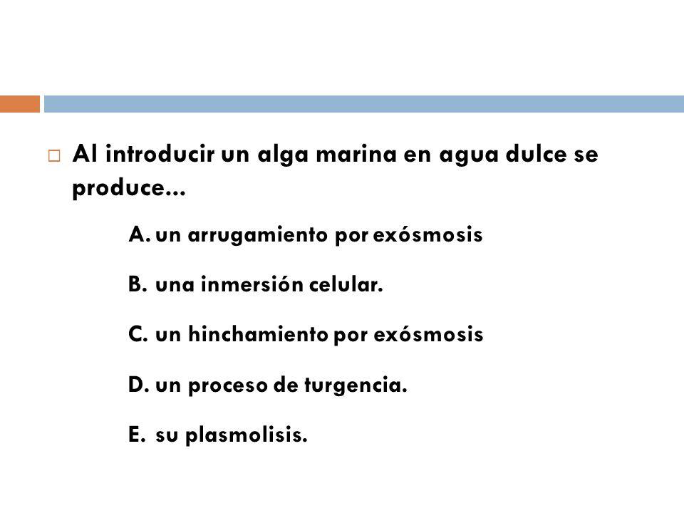 Al introducir un alga marina en agua dulce se produce... A.un arrugamiento por exósmosis B.una inmersión celular. C.un hinchamiento por exósmosis D.un