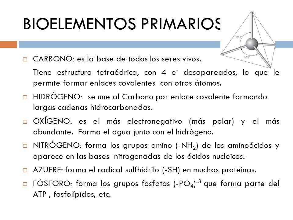 BIOELEMENTOS PRIMARIOS CARBONO: es la base de todos los seres vivos. Tiene estructura tetraédrica, con 4 e - desapareados, lo que le permite formar en