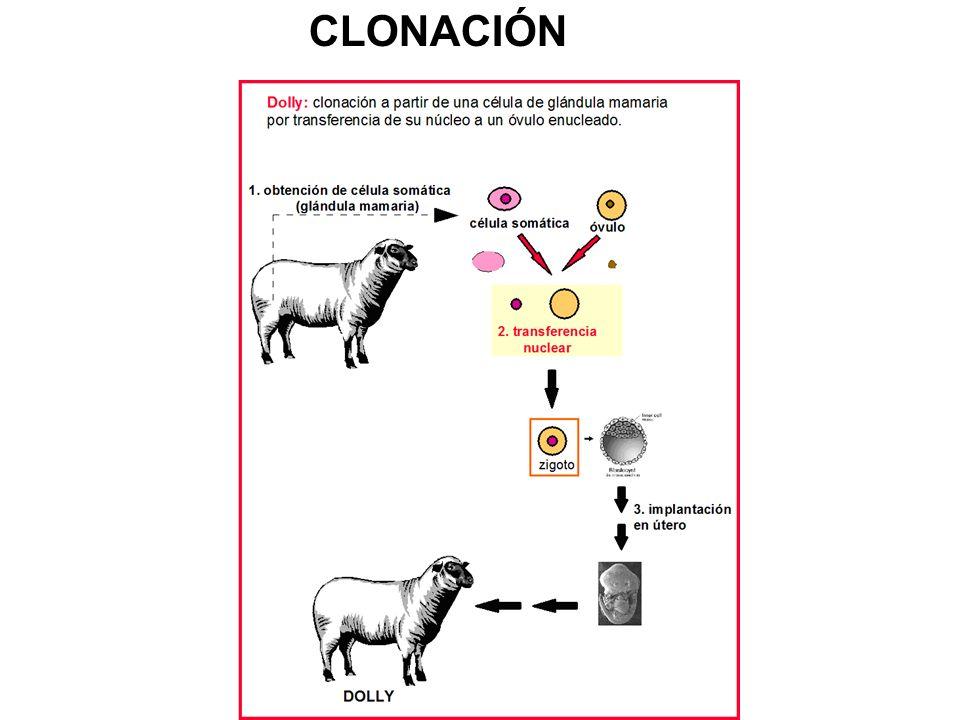 CLONACIÓN