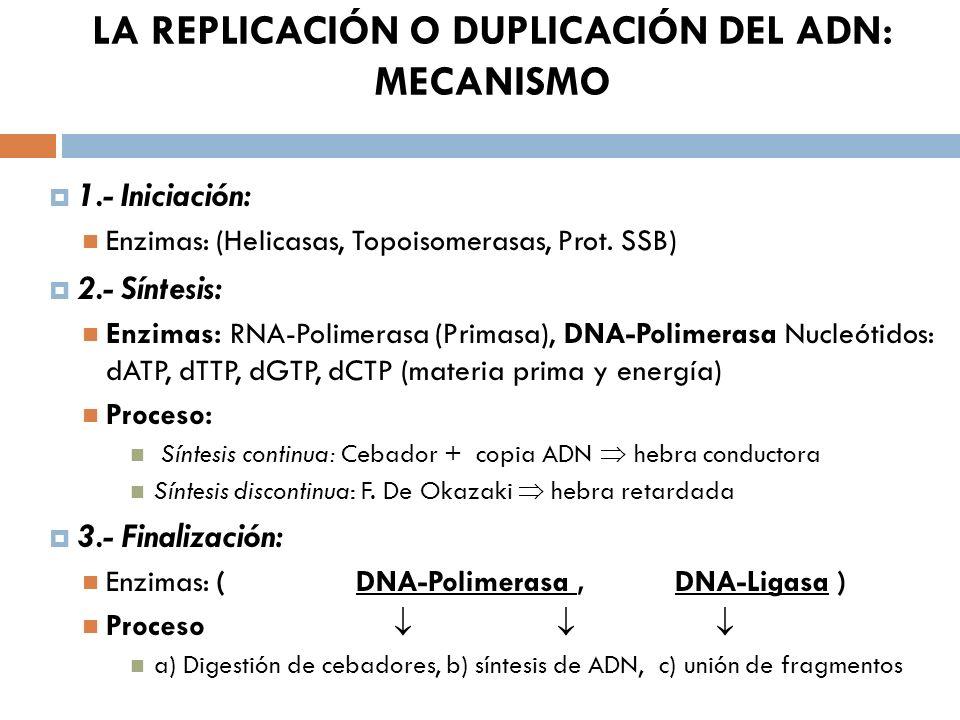 LA REPLICACIÓN O DUPLICACIÓN DEL ADN: MECANISMO 1.- Iniciación: Enzimas: (Helicasas, Topoisomerasas, Prot. SSB) 2.- Síntesis: Enzimas: RNA-Polimerasa