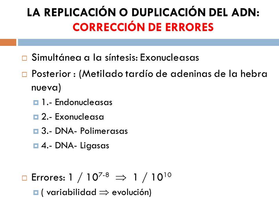 LA REPLICACIÓN O DUPLICACIÓN DEL ADN: CORRECCIÓN DE ERRORES Simultánea a la síntesis: Exonucleasas Posterior : (Metilado tardío de adeninas de la hebra nueva) 1.- Endonucleasas 2.- Exonucleasa 3.- DNA- Polimerasas 4.- DNA- Ligasas Errores: 1 / 10 7-8 1 / 10 10 ( variabilidad evolución)
