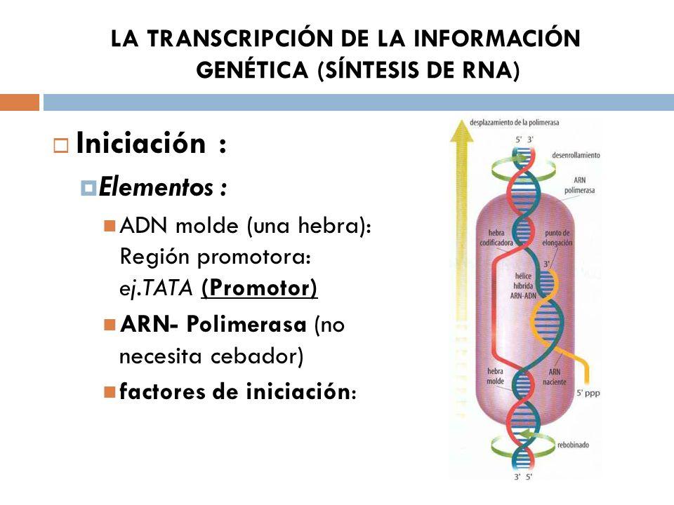 LA TRANSCRIPCIÓN DE LA INFORMACIÓN GENÉTICA (SÍNTESIS DE RNA) Iniciación : Elementos : ADN molde (una hebra): Región promotora: ej.TATA (Promotor) ARN