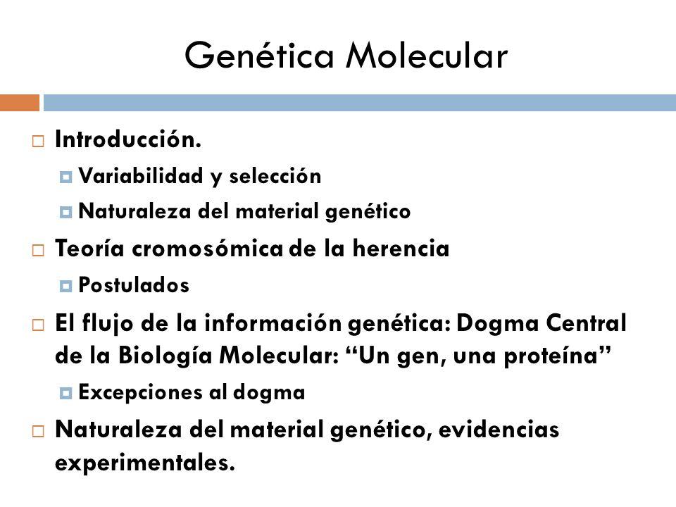 Genética Molecular Introducción. Variabilidad y selección Naturaleza del material genético Teoría cromosómica de la herencia Postulados El flujo de la
