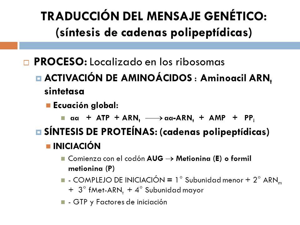TRADUCCIÓN DEL MENSAJE GENÉTICO: (síntesis de cadenas polipeptídicas) PROCESO: Localizado en los ribosomas ACTIVACIÓN DE AMINOÁCIDOS : Aminoacil ARN t sintetasa Ecuación global: aa + ATP + ARN t aa-ARN t + AMP + PP i SÍNTESIS DE PROTEÍNAS: (cadenas polipeptídicas) INICIACIÓN Comienza con el codón AUG Metionina (E) o formil metionina (P) - COMPLEJO DE INICIACIÓN = 1° Subunidad menor + 2° ARN m + 3° fMet-ARN t + 4° Subunidad mayor - GTP y Factores de iniciación