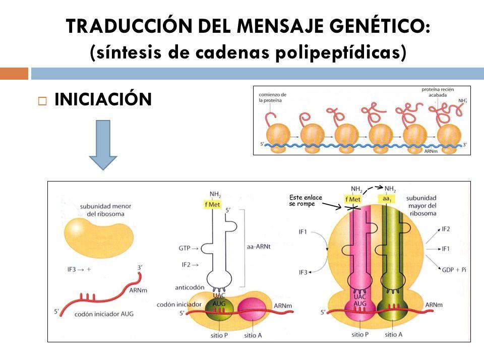 TRADUCCIÓN DEL MENSAJE GENÉTICO: (síntesis de cadenas polipeptídicas) INICIACIÓN