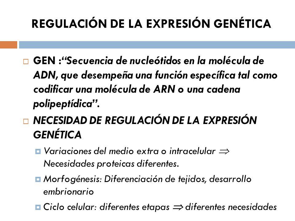 REGULACIÓN DE LA EXPRESIÓN GENÉTICA GEN :Secuencia de nucleótidos en la molécula de ADN, que desempeña una función específica tal como codificar una molécula de ARN o una cadena polipeptídica.