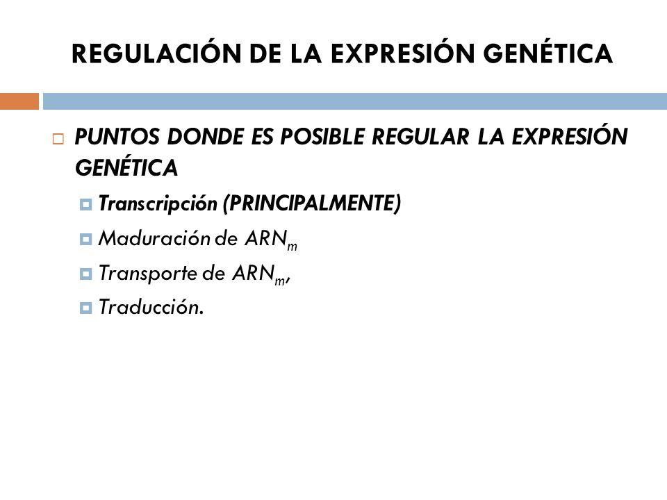 REGULACIÓN DE LA EXPRESIÓN GENÉTICA PUNTOS DONDE ES POSIBLE REGULAR LA EXPRESIÓN GENÉTICA Transcripción (PRINCIPALMENTE) Maduración de ARN m Transporte de ARN m, Traducción.