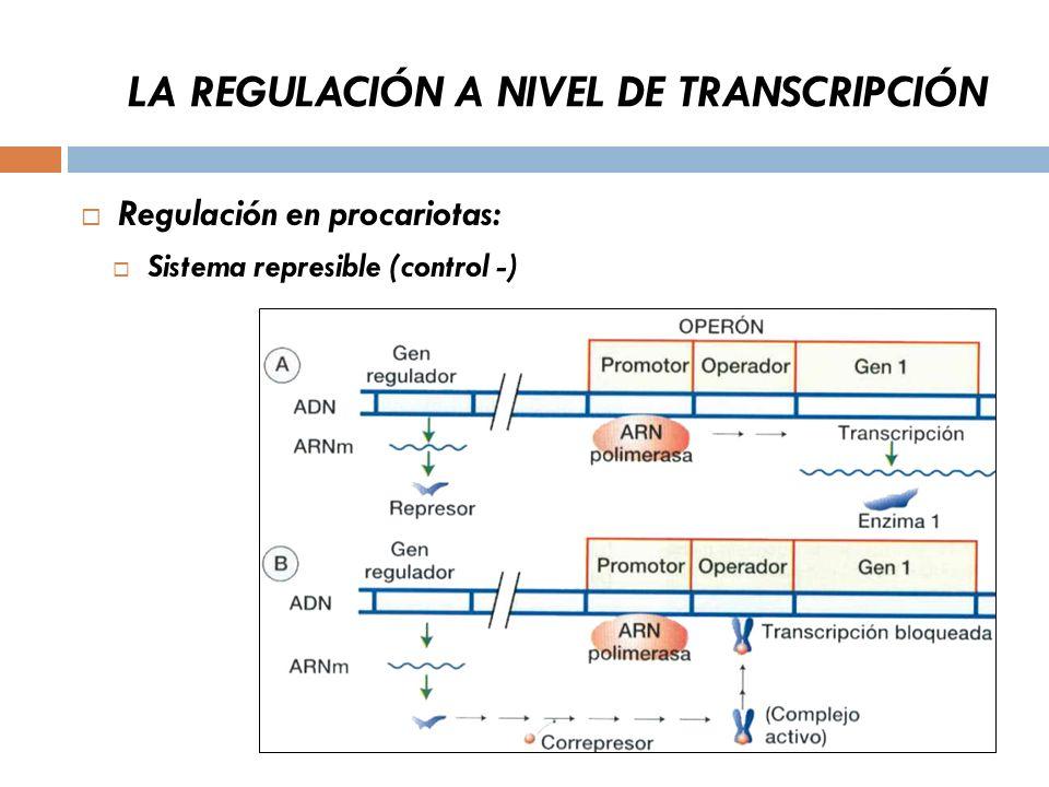 LA REGULACIÓN A NIVEL DE TRANSCRIPCIÓN Regulación en procariotas: Sistema represible (control -)