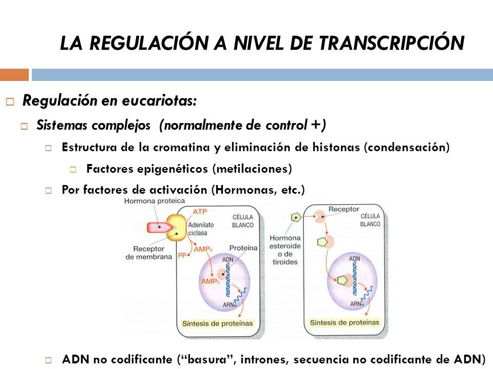 LA REGULACIÓN A NIVEL DE TRANSCRIPCIÓN Regulación en eucariotas: Sistemas complejos (normalmente de control +) Estructura de la cromatina y eliminación de histonas (condensación) Factores epigenéticos (metilaciones) Por factores de activación (Hormonas, etc.) ADN no codificante (basura, intrones, secuencia no codificante de ADN)