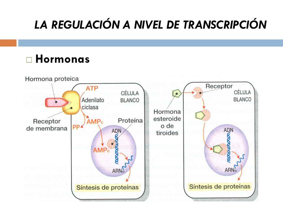 LA REGULACIÓN A NIVEL DE TRANSCRIPCIÓN Hormonas