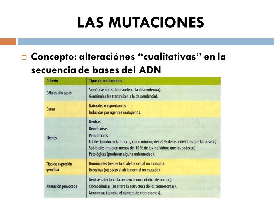 LAS MUTACIONES Concepto: alteraciónes cualitativas en la secuencia de bases del ADN