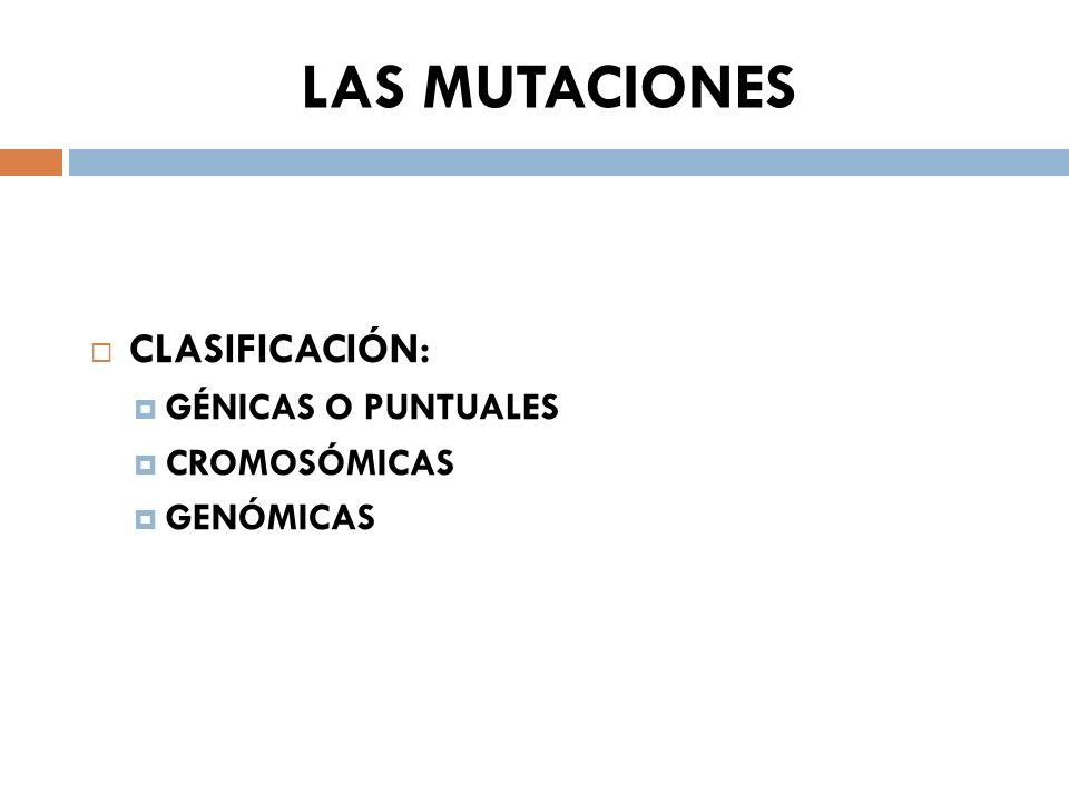 LAS MUTACIONES CLASIFICACIÓN: GÉNICAS O PUNTUALES CROMOSÓMICAS GENÓMICAS