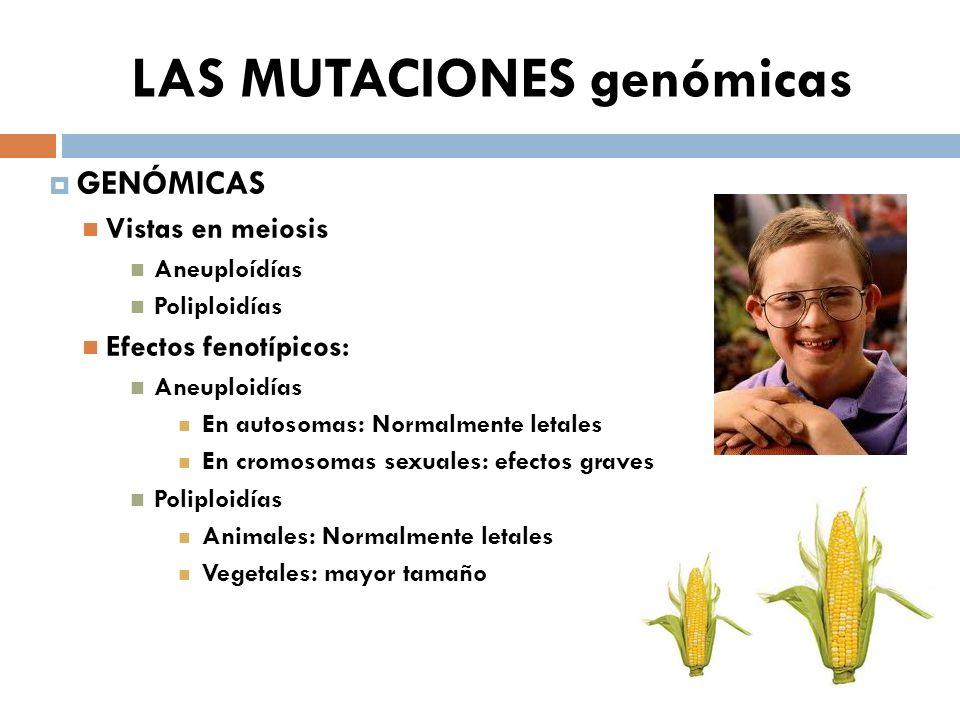 LAS MUTACIONES genómicas GENÓMICAS Vistas en meiosis Aneuploídías Poliploidías Efectos fenotípicos: Aneuploidías En autosomas: Normalmente letales En