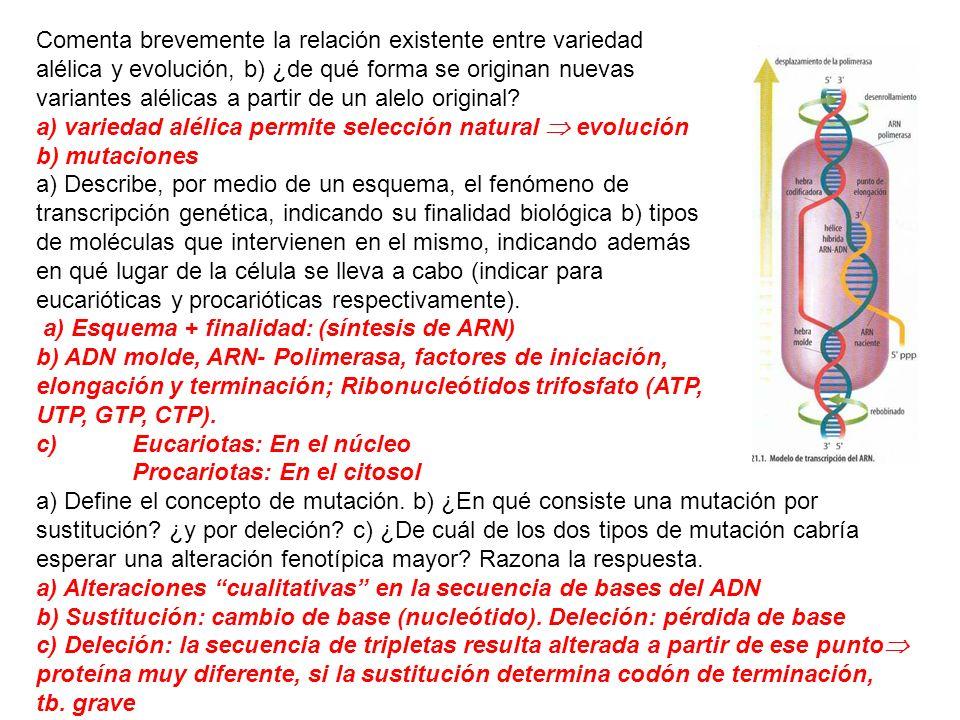 Comenta brevemente la relación existente entre variedad alélica y evolución, b) ¿de qué forma se originan nuevas variantes alélicas a partir de un ale