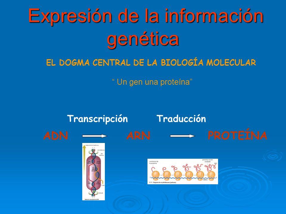 Expresión de la información genética Expresión de la información genética EL DOGMA CENTRAL DE LA BIOLOGÍA MOLECULAR Un gen una proteína ADN ARN PROTEÍNA Transcripción Traducción