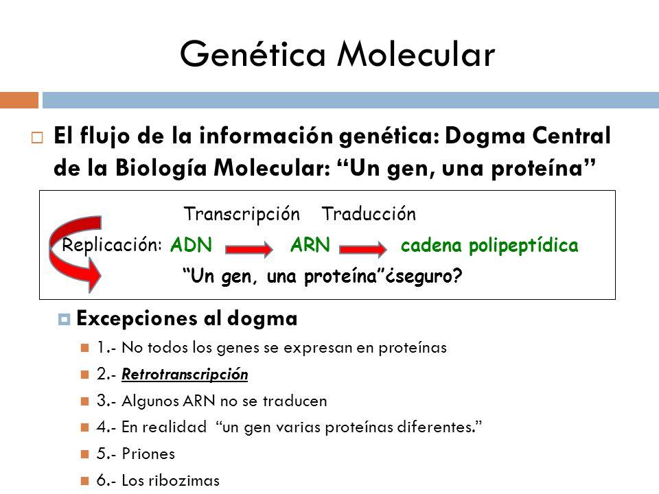 Genética Molecular El flujo de la información genética: Dogma Central de la Biología Molecular: Un gen, una proteína Excepciones al dogma 1.- No todos los genes se expresan en proteínas 2.- Retrotranscripción 3.- Algunos ARN no se traducen 4.- En realidad un gen varias proteínas diferentes.
