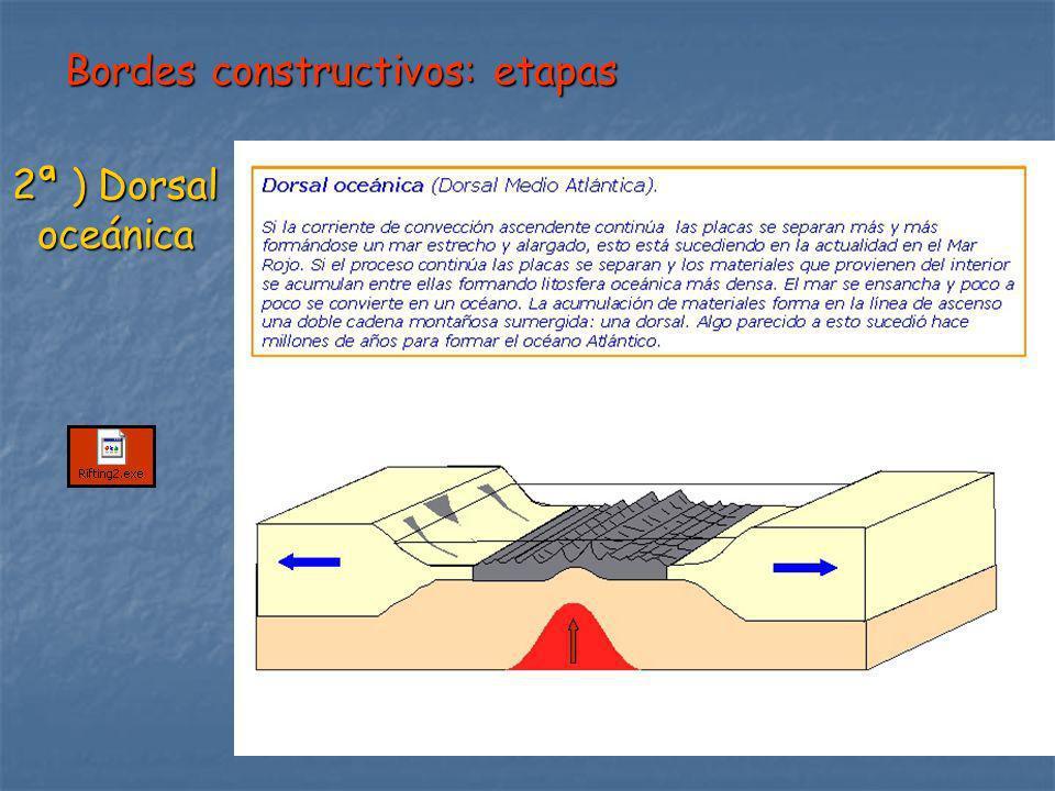 Bordes constructivos: etapas 2ª ) Dorsal oceánica