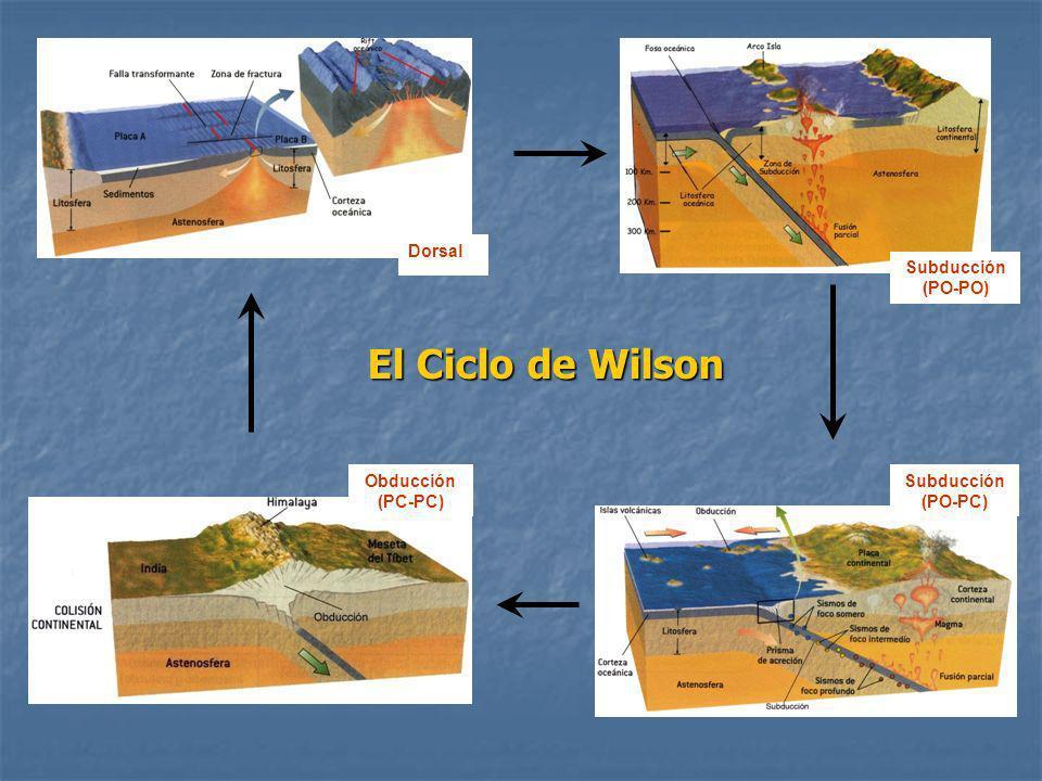 Subducción (PO-PC) Obducción (PC-PC) El Ciclo de Wilson Dorsal Subducción (PO-PO)