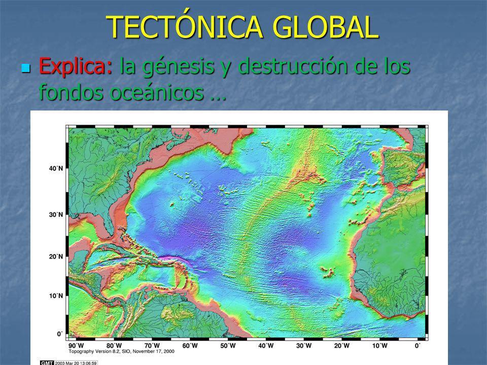 Explica: la génesis y destrucción de los fondos oceánicos …