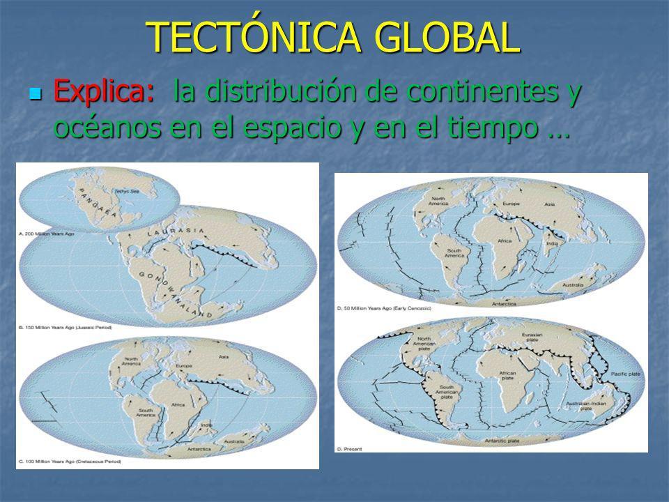 Explica: l l l la distribución de continentes y océanos en el espacio y en el tiempo …