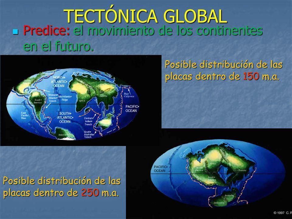 Predice: el movimiento de los continentes en el futuro. Posible distribución de las placas dentro de 150 m.a. Posible distribución de las placas dentr