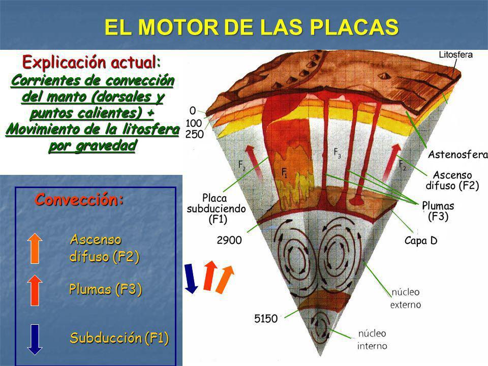 Convección: Convección:Ascenso difuso (F2) Plumas (F3) Subducción (F1) EL MOTOR DE LAS PLACAS Explicación actual: Corrientes de convección del manto (