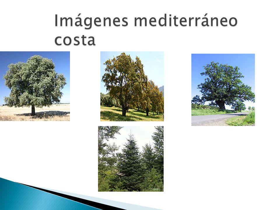 -Localización: Interior peninsular.
