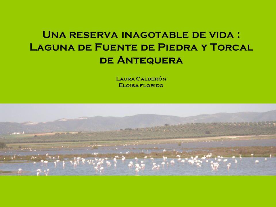 Flora y Fauna En el Torcal de Antequera podemos encontrar arbustos espinosos, plantas herbáceas, matorrales, musgos etc.