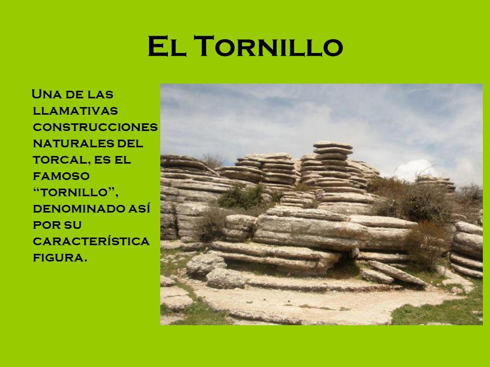 El Tornillo Una de las llamativas construcciones naturales del torcal, es el famoso tornillo, denominado así por su característica figura.